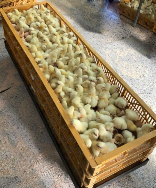 polloslagranjota.com